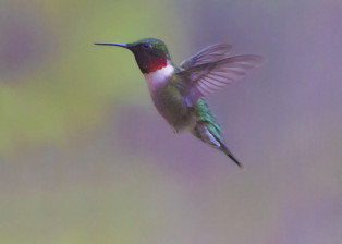 Hummingbird 5DM32077 B