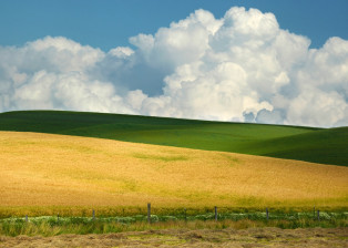Palouse Pillows