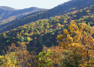 Blue Ridge Parkway Peak Color